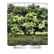 A Glimpse Of Nature Shower Curtain