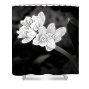 A Glowing Daffodil Shower Curtain