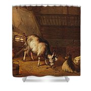 A Goat And Two Sheep In A Stable Shower Curtain
