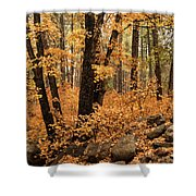 A Golden Autumn Forest  Shower Curtain