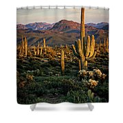 A Golden Sonoran Evening  Shower Curtain
