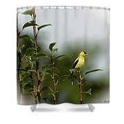 A Goldfinch In A Pear Tree Shower Curtain
