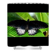 A Graceful Beauty Shower Curtain