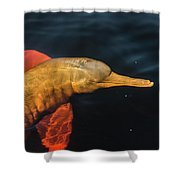 A Graceful Turn Shower Curtain