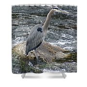 A Great Blue Heron At The Spokane River 3 Shower Curtain