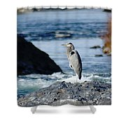 A Great Blue Heron At The Spokane River Shower Curtain