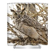 A Great Horned Owl's Wide Eyes Shower Curtain