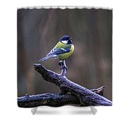 A Great Tit In The Rain Shower Curtain