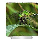 A Green Dragon's Breakfast Shower Curtain
