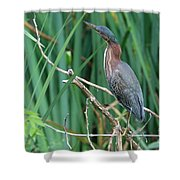 A Green Heron By The Canal Shower Curtain