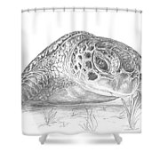 A Green Sea Turtle Grayscale Shower Curtain