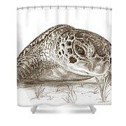 A Green Sea Turtle In Earthtones Shower Curtain