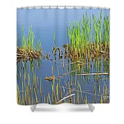 A Greening Marshland Shower Curtain