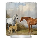 A Grey And A Chestnut Hunter With A Deerhound Shower Curtain