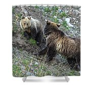 A Grizzly Moment Shower Curtain