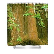 A Group Giant Redwood Trees In Muir Woods,california. Shower Curtain
