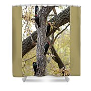 A Group Of Acorn Woodpeckers In A Tree Shower Curtain
