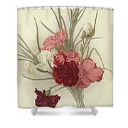 A Group Of Clove Carnations Shower Curtain