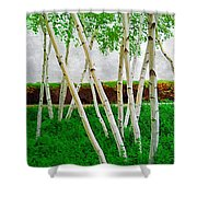 A Grove Of Birches 1 Shower Curtain