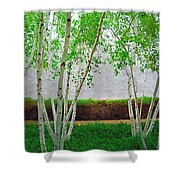 A Grove Of Birches 2 Shower Curtain