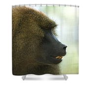 A Guinea Baboon At The Lincoln Shower Curtain