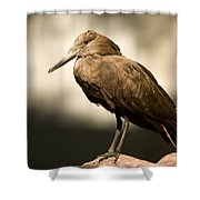A Hammerkop At The Lincoln Childrens Shower Curtain