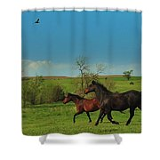A Hawk And Horses In Kansas Shower Curtain