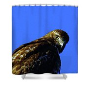 A Hawk Looking Back  Shower Curtain