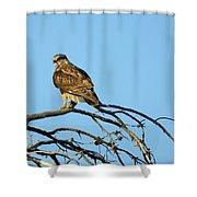 A Hawks Eye View Shower Curtain