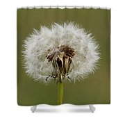 A Head Full Of Wishes Shower Curtain
