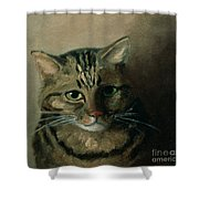 A Head Study Of A Tabby Cat Shower Curtain