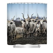 Grey Cattle Herd Shower Curtain