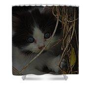 A Hiding Kitten Shower Curtain