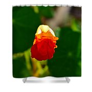 A Hint 2 Shower Curtain