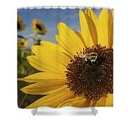 A Honey Bee Visiting A Sunflower Shower Curtain