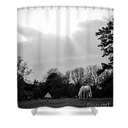 A Horse In Light Shower Curtain