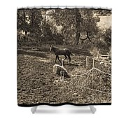 A Horse In The Field Shower Curtain