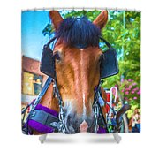 A Horse Of Course Shower Curtain