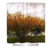 A Huisache Morning Shower Curtain