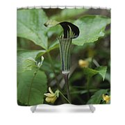 A Jack In The Pulpit  Grows In The Mist Shower Curtain