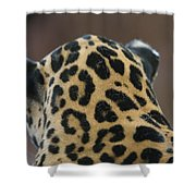 A Jaguar At Omahas Henry Doorly Zoo Shower Curtain