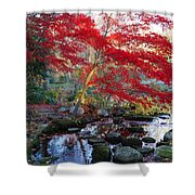 A Japanese Maple With Colorful, Red Shower Curtain