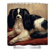 A King Charles Spaniel Seated On A Red Cushion Shower Curtain