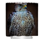 A Lady Of Distinction Shower Curtain