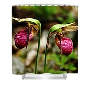 A Lady's Slippers Shower Curtain
