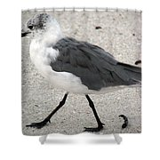 A Late Summer Walk Shower Curtain