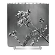 A Lazy Summer Day - Joe Pye Weed 2 Bw Shower Curtain