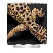 A Leopard Gecko Eublpharis Macularis Shower Curtain