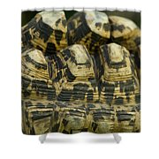 A Leopard Tortoise On The Move Shower Curtain