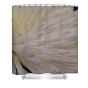 A Light Within Petals Shower Curtain